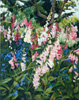 San Francisco Wild Flowers 1993